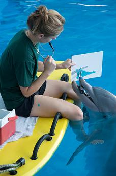 Winter the Dolphin Painting at the Clearwater Marine Aquarium