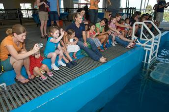 Children from the Children's Cancer Center at the Clearwater Marine Aquarium