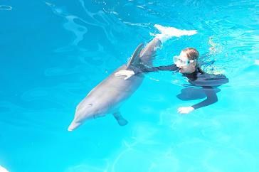 Winter the Dolphin wearing her prosthetic tail - photo by Chris Connell